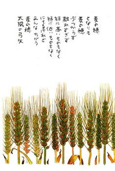 星野富弘はがき_0002.jpg
